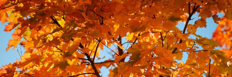orange leaves on a tree